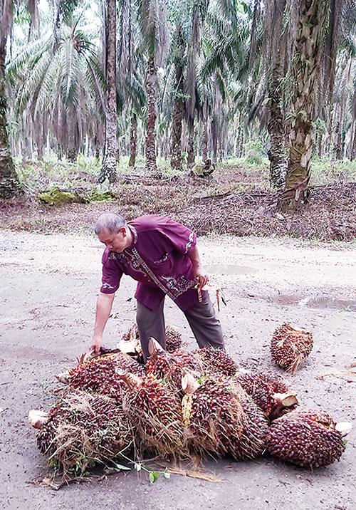 Lakukan Pembinaan dan Good Agricultural Practices