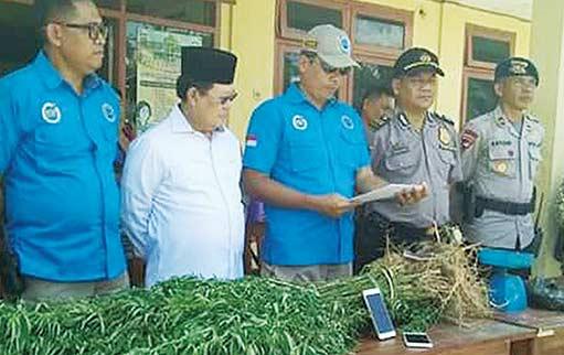 Satu Ha Ladang  Ganja Ditemukan di Muratara