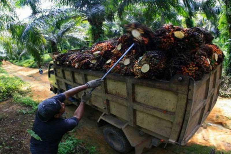 Kenaikan Harga CPO Tekan Defisit Indonesia