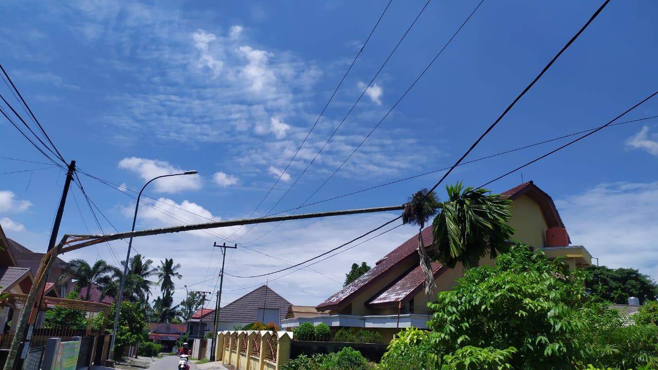 Awas, Ada Pohon Tumbang Timpa Kabel Listrik di Thamrin Ujung