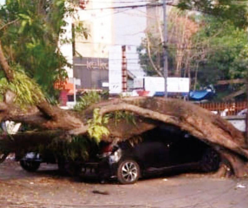 Sedang Parkir, Mobil Tertimpa Pohon