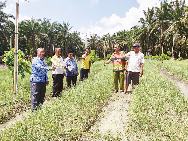 20 Hektare untuk Tanaman Bawang Merah