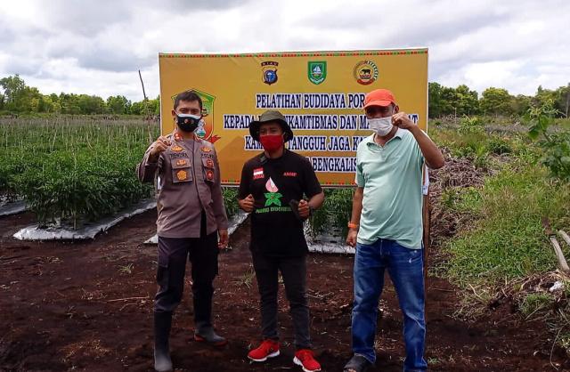Budidaya Porang Jadi Target Pengembangan Kampung Tangguh Polres Bengkalis