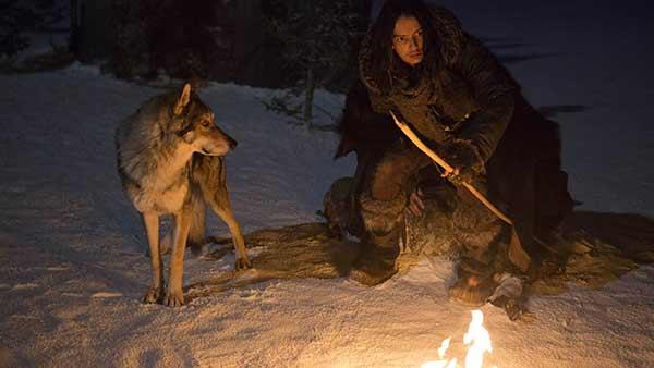 Persahabatan Terbaik Manusia dengan Serigala