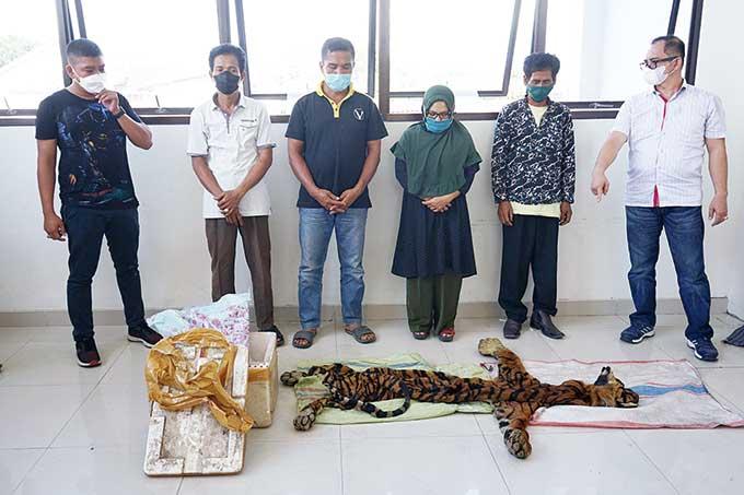 Kulit Harimau Dijual hingga Rp50 Juta