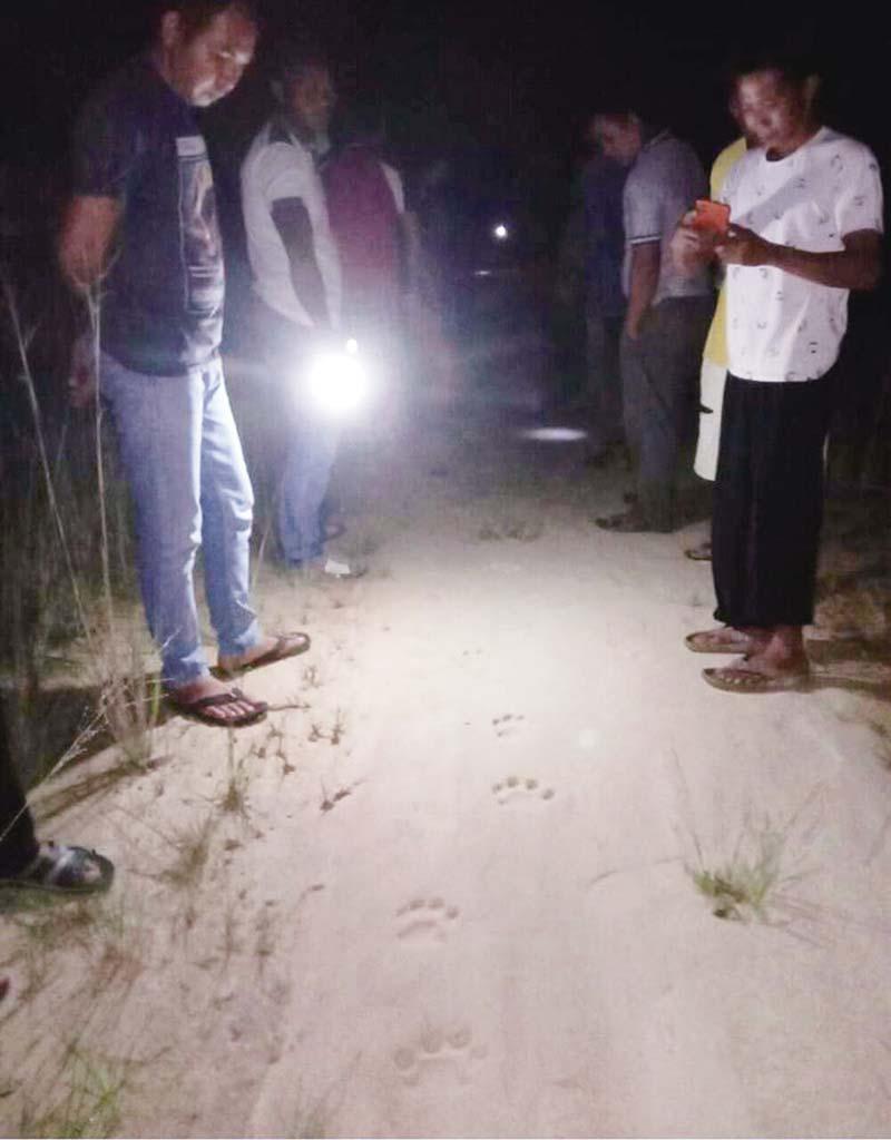 Warga Heboh Temukan Jejak Harimau Sumatera