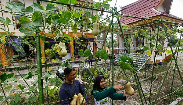 Berkebun di Pekarangan Rumah Tanam dan Nikmati Sendiri