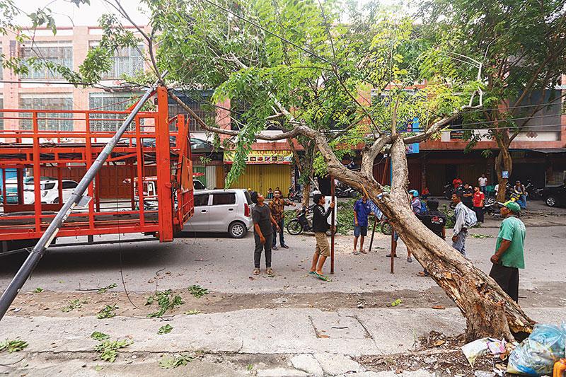 Pohon Tumbang Tersangkut Truk