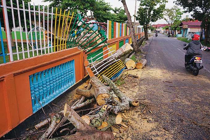 Pohon Tumbang, Satu Pengendara Motor Jadi Korban