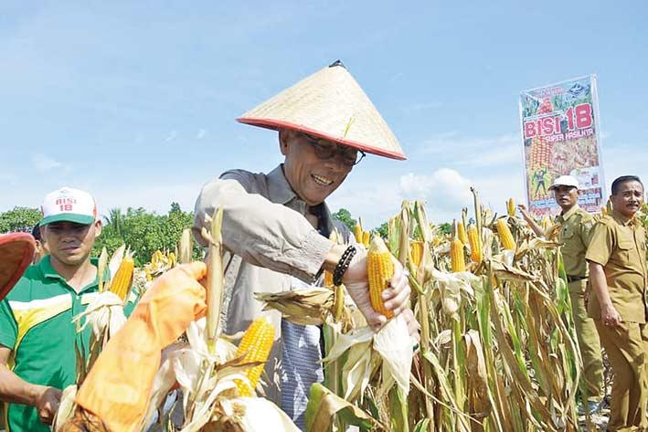 Bupati: Bertani Jagung Sangat Menjanjikan