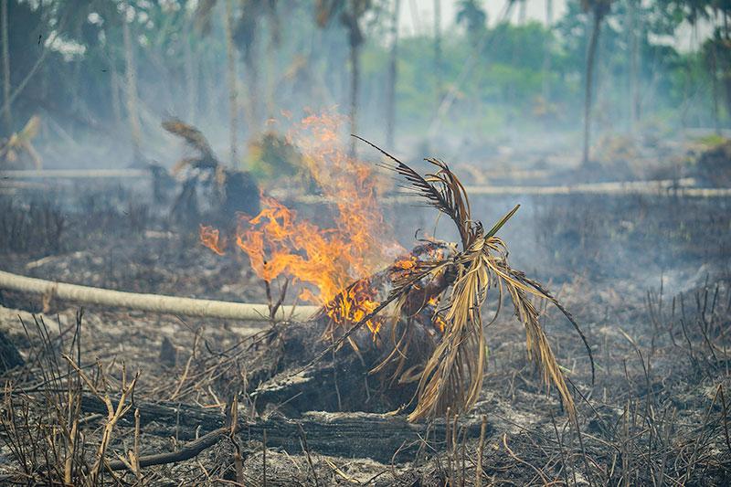 Tiga Hektare Lahan Terbakar