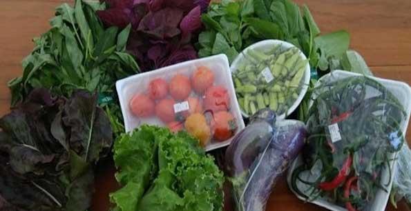 Makanan ini Bisa Memangkas Risiko Terkena Kanker Payudara