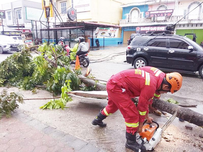 Pohon Tumbang Faktor Usia dan Cuaca