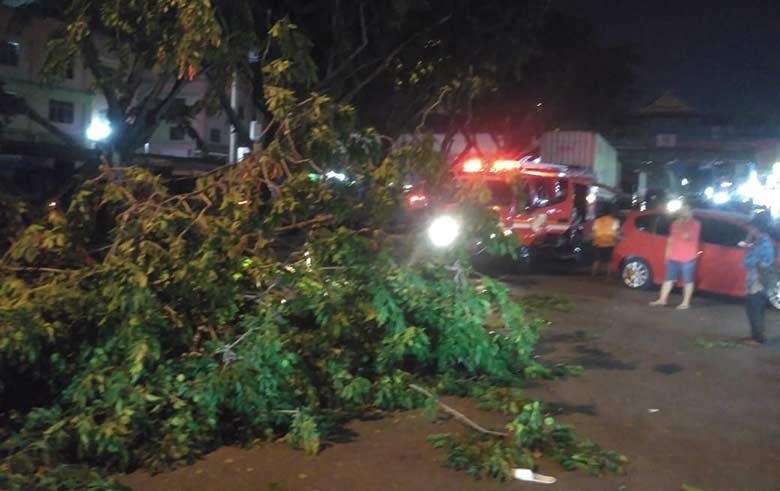 Petugas Evakuasi Pohon Tumbang