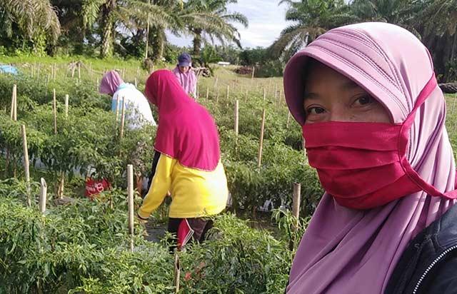 Petani Bungaraya Harapkan Bantuan Traktor