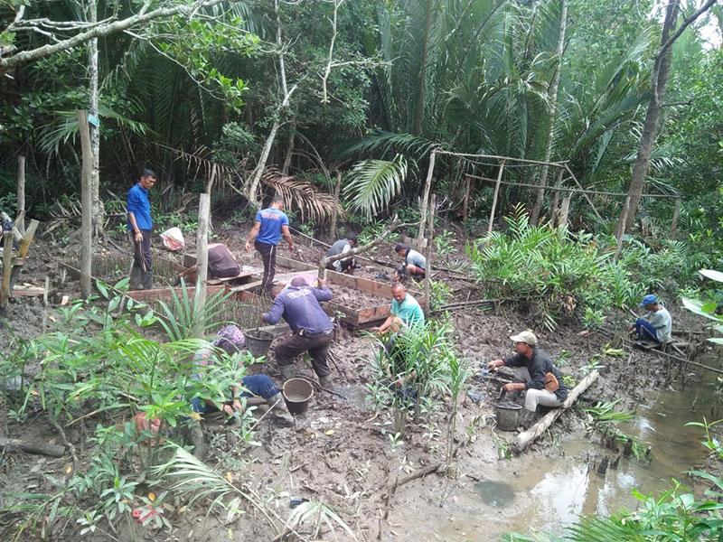 Program Padat Karya Mangrove KLHK di Riau Serap 1.552 Tenaga Kerja