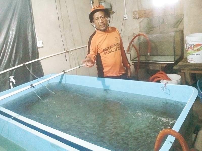 Melihat Usaha Pembibitan Ikan Patin