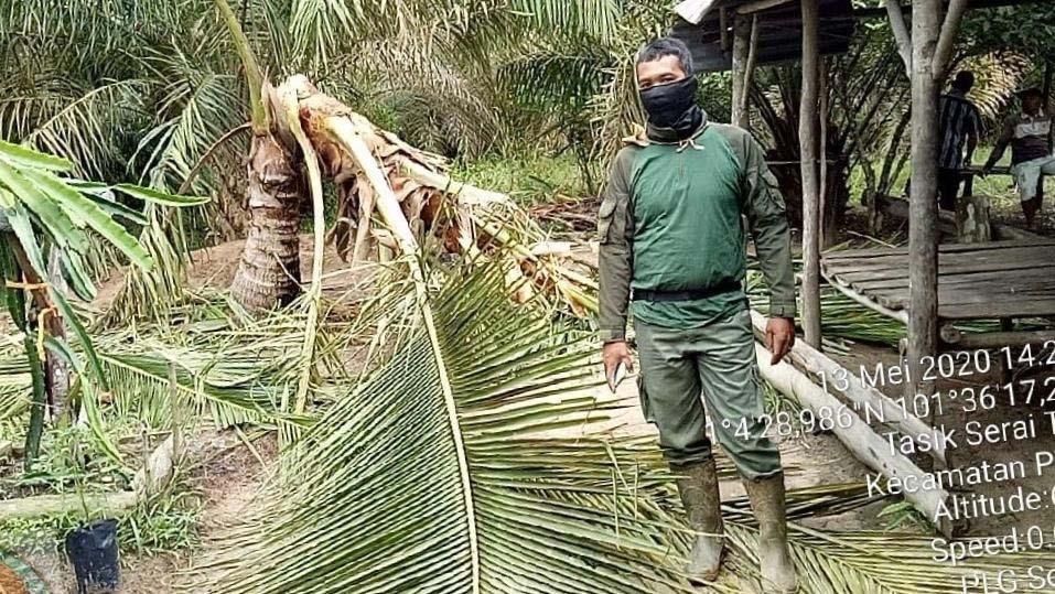 Belasan Gajah Sumatera Sepekan Berada di Pemukiman Warga Bengkalis