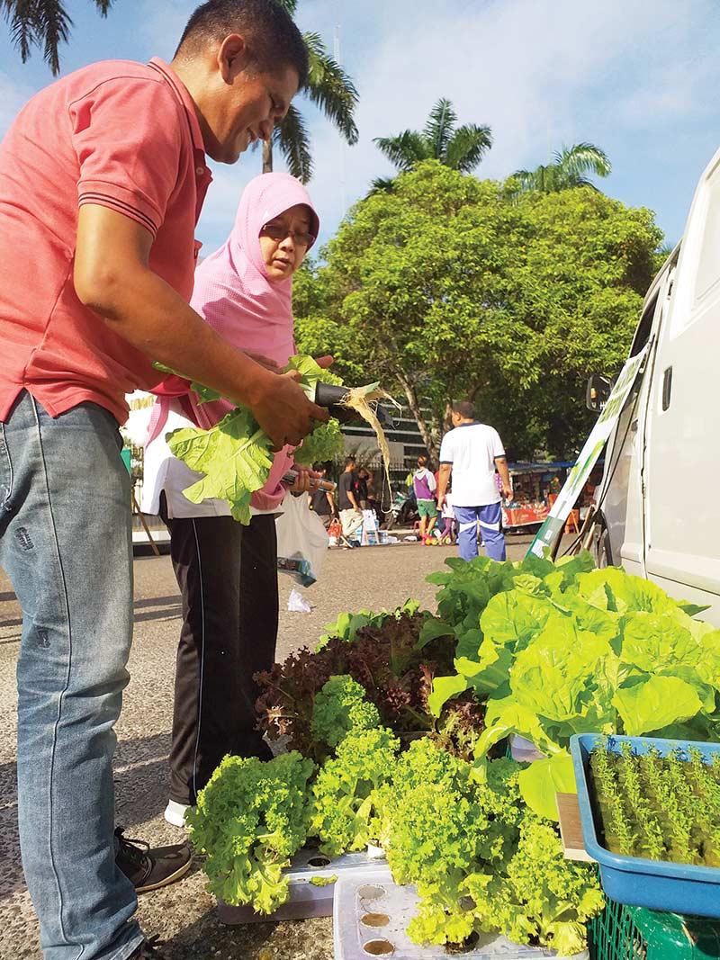 Sayuran Hidroponik Dijual Di Pinggir Jalan Riaupos Co Mobile