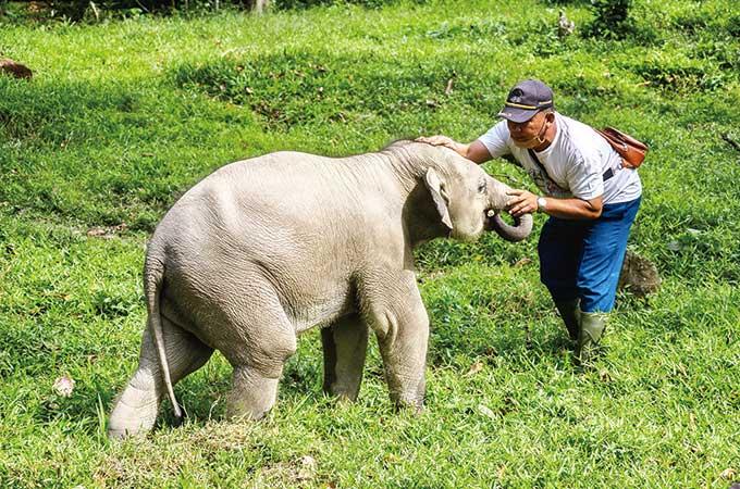 Menyapa Gajah di Alam Indah