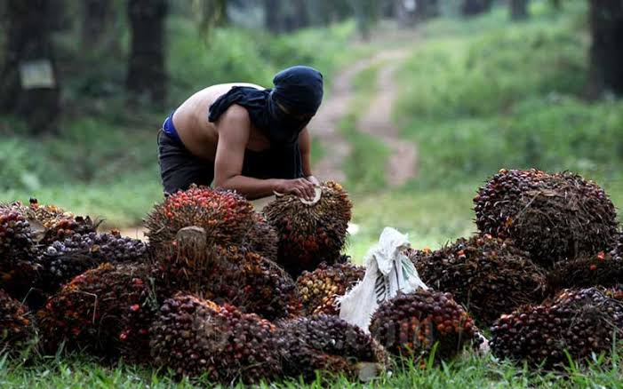 Alhamdulillah, Awal Ramadan, Harga TBS Riau Naik