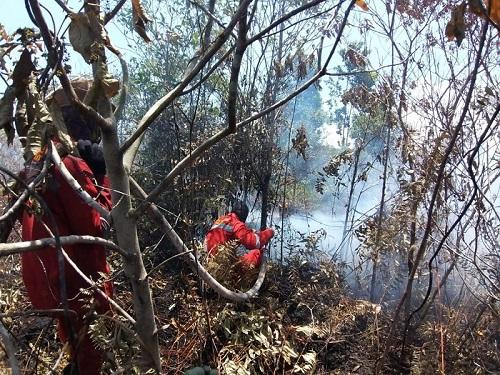 Waspada, Kabut Asap Berpotensi Terjadi di Dumai