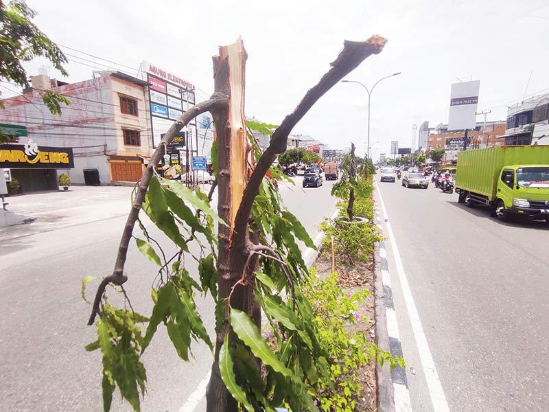 Penebang 83 Pohon di Median Jalan Tuanku Tambusai Resmi Dipolisikan