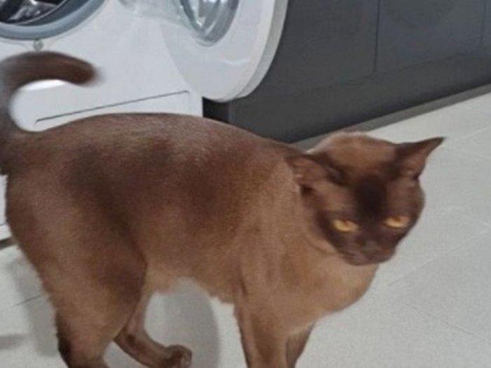 Ajaib, 12 Menit Tergiling di Mesin Cuci, Kucing Ini Tetap Hidup