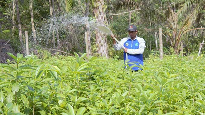 Rehabilitasi Hutan untuk Kesejahteraan