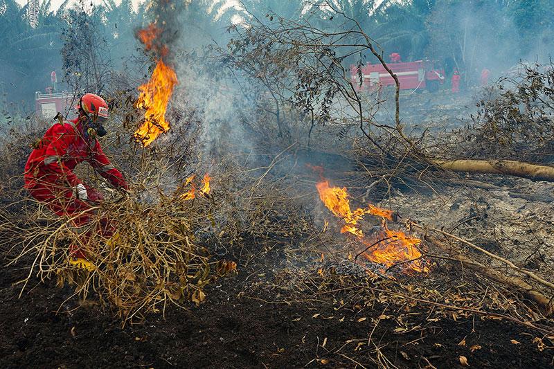 8.968,25 Ha Lahan di Riau Terbakar
