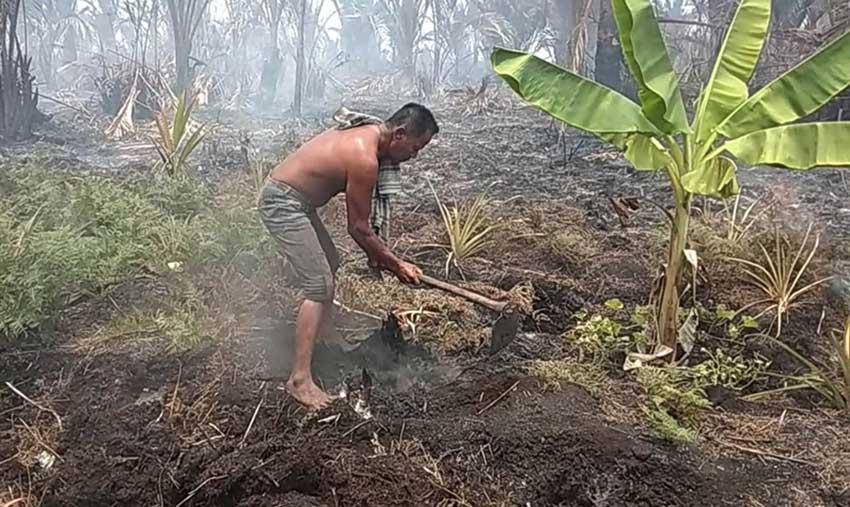 Pemda Janji Bantu Kebun Warga yang Terbakar