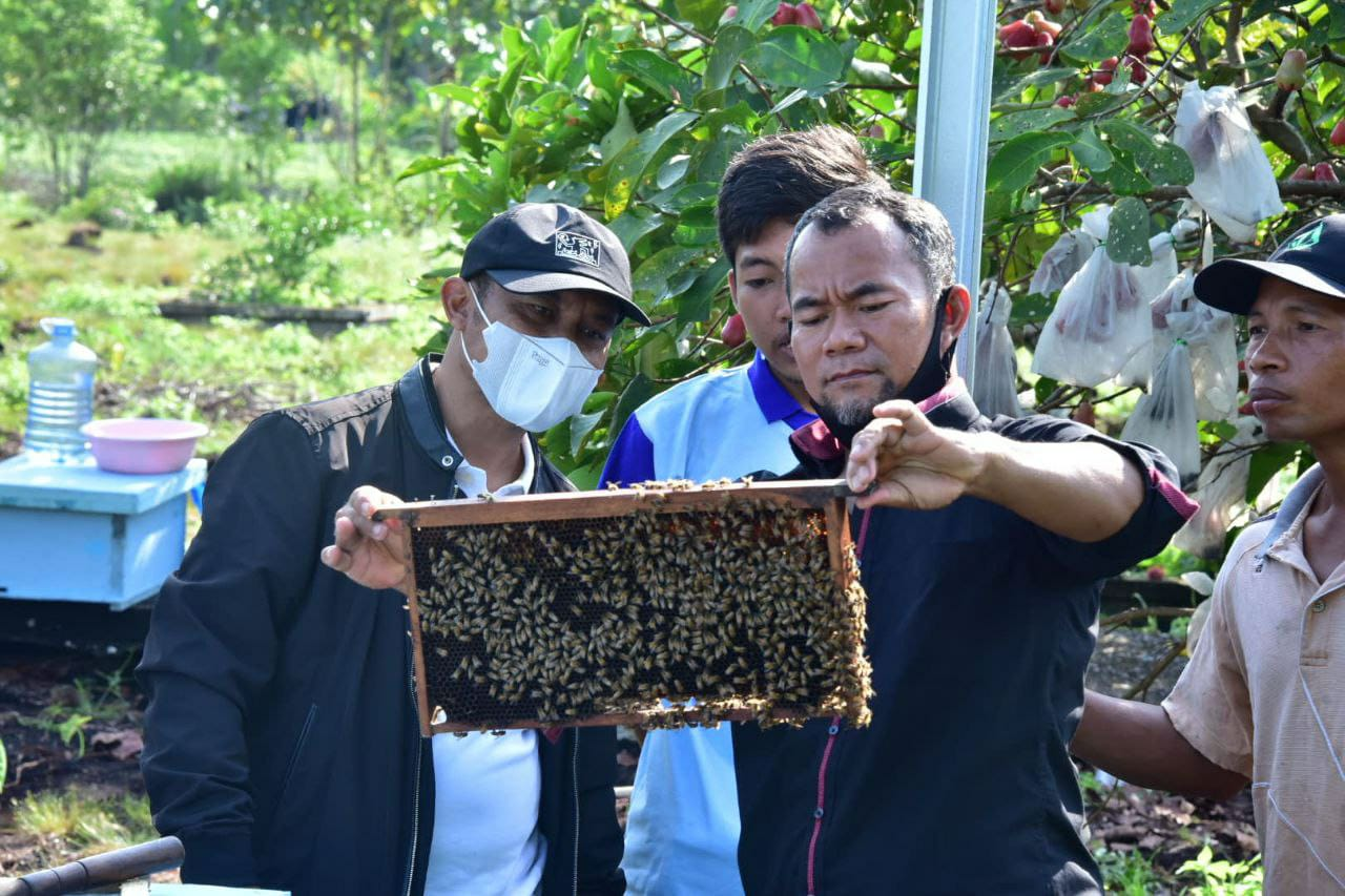 Tinjau Budidaya Lebah Madu, Bagus Santoso: Terus Garap Potensi Desa