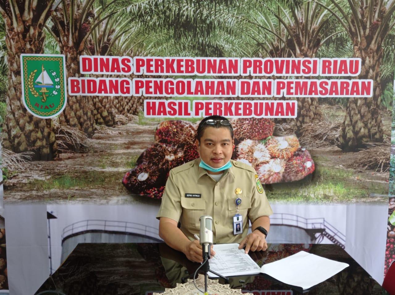 Harga TBS Kelapa Sawit Riau Masih Diatas Rp 2000 per Kg