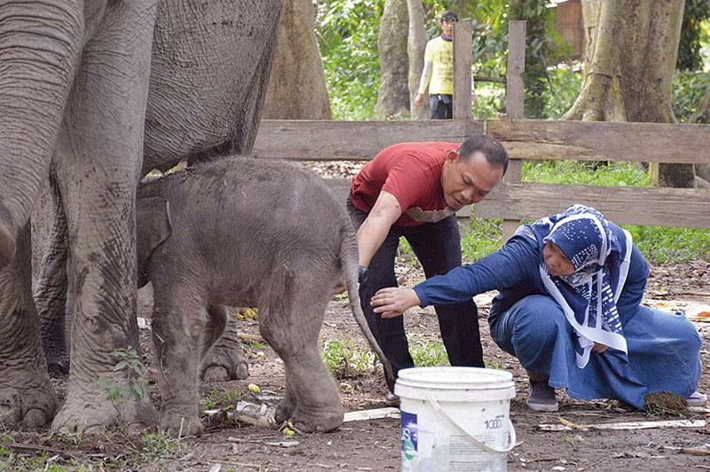 Bayi Gajah Diberi Nama Damar