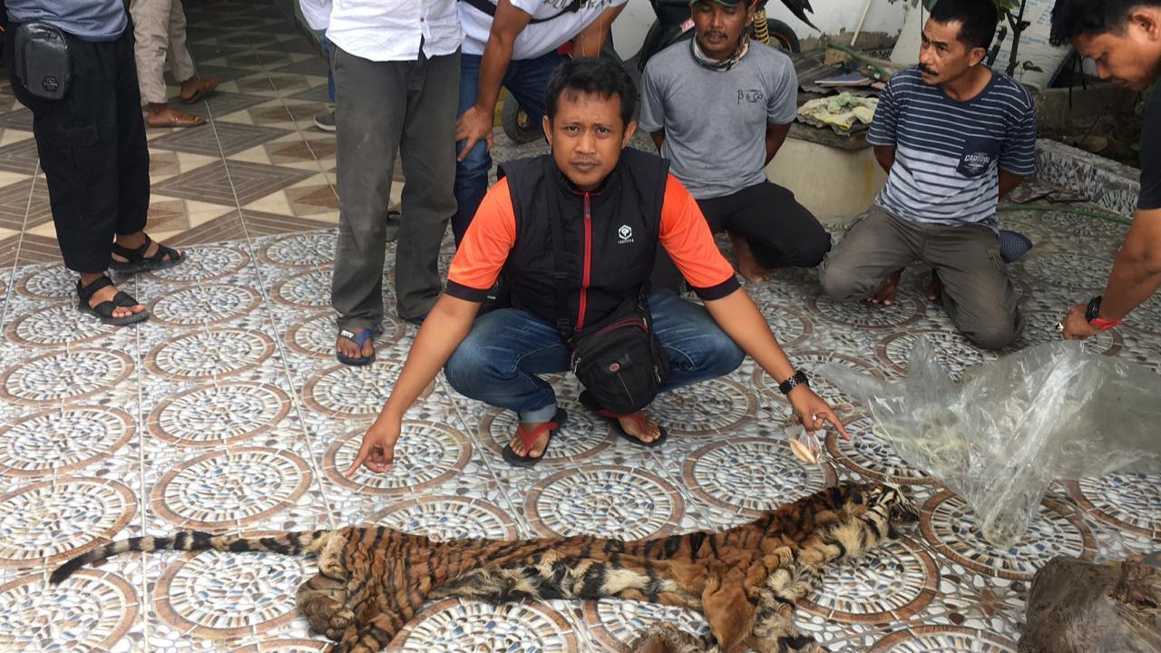 Polda Gagalkan Perdagangan Organ Harimau Sumatera