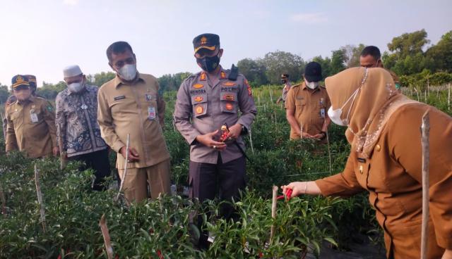 Bupati dan Kapolres Bengkalis Panen 500 Kg Cabai di Kampung Tangguh
