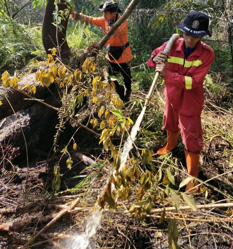 3 Hektare Kebun Sawit di Desa Pulau Muda Terbakar