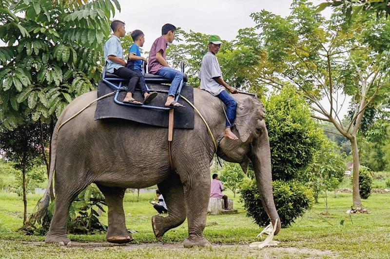 Kebun Binatang Kasang Kulim Dipadati Wisatawan