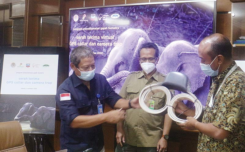 Manfaatkan Teknologi Satelit untuk Lindungi Gajah Sumatera