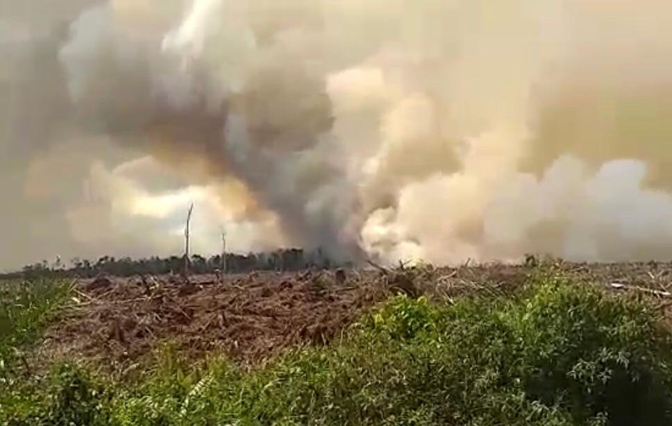 Pelalawan Sumbang 26 Hotspot, di Riau Terpantau 41 Titik Api Pagi Ini