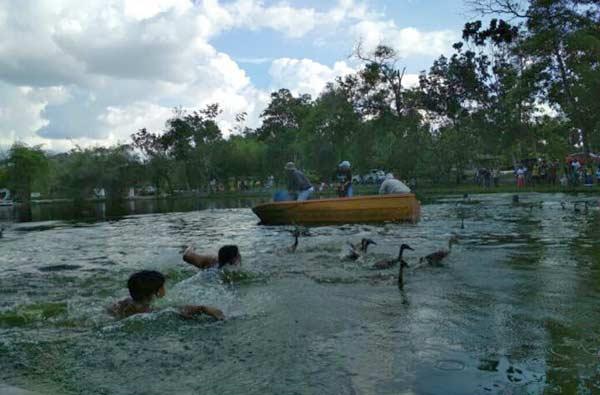 Petang Megang, Alam Mayang Pekanbaru Lepas Ratusan Bebek