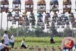Disparbud Jadikan Lomba Burung Berkicau Promosi Wisata