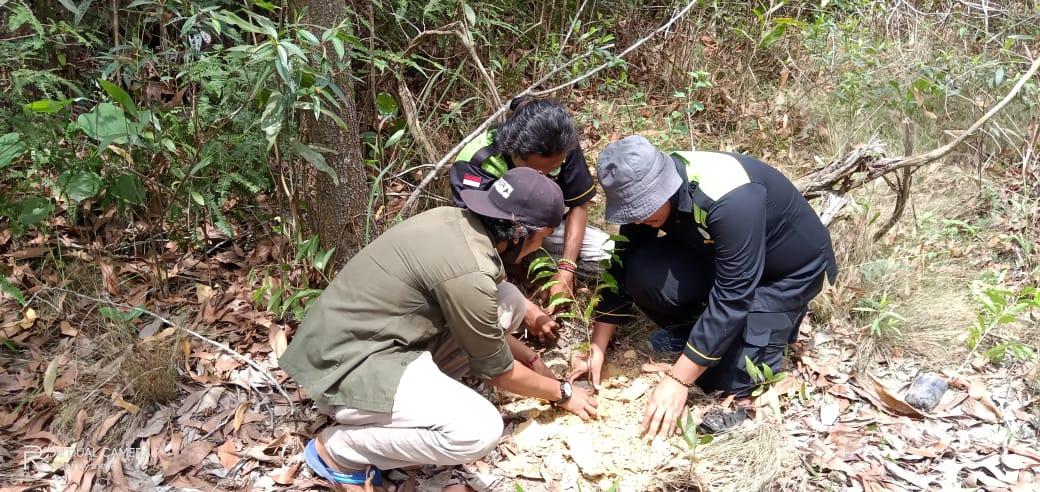 Di Habitat Gajah, Seribu Pohon untuk Menjaga Nyawa Hutan Talang