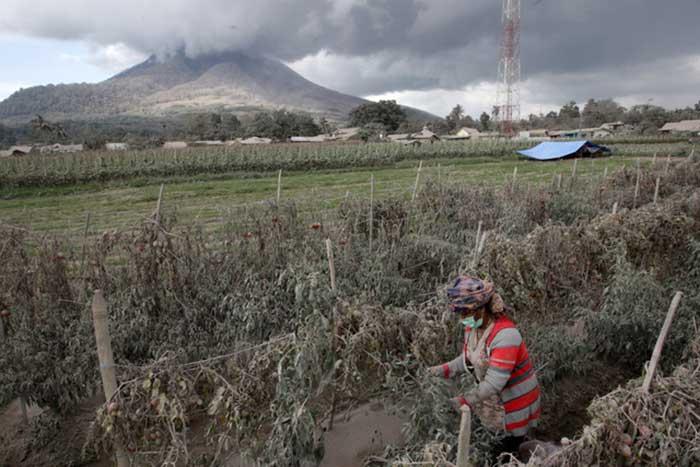 Gunung Sinabung Letuskan Abu Vulkanik Setinggi 2.000 Meter