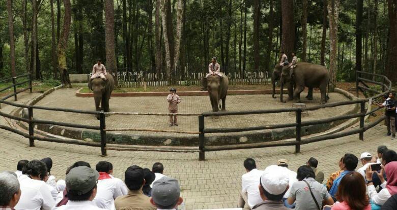 Melihat Wisata Eksotis Gajah Jinak dan Siamang di Aek Nauli