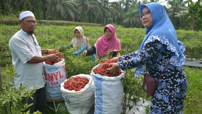 DMPA APP Sinarmas Dukung Perekonomian Petani