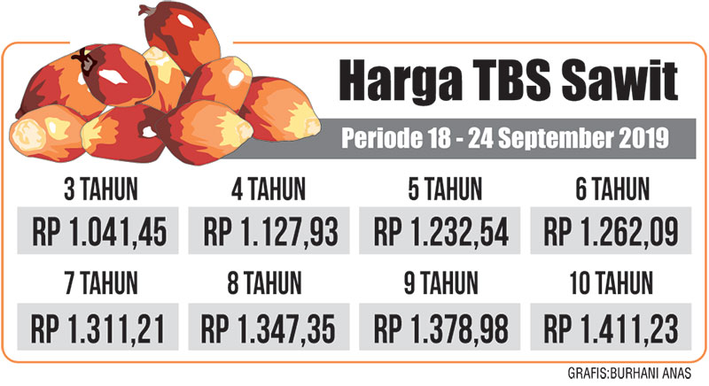 Harga TBS Kelapa Sawit Turun Lagi