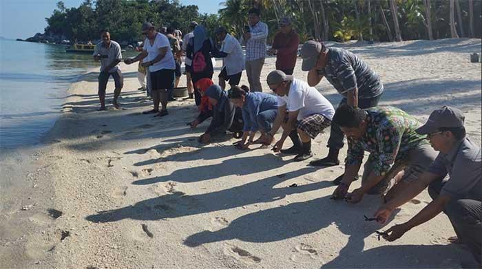 Melihat Dari Dekat Konservasi Penyu di Pulau Pahat