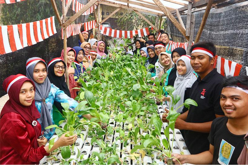 Pepelingasih Riau Panen Perdana Sayuran Hidroponik di KBA Indah Madani