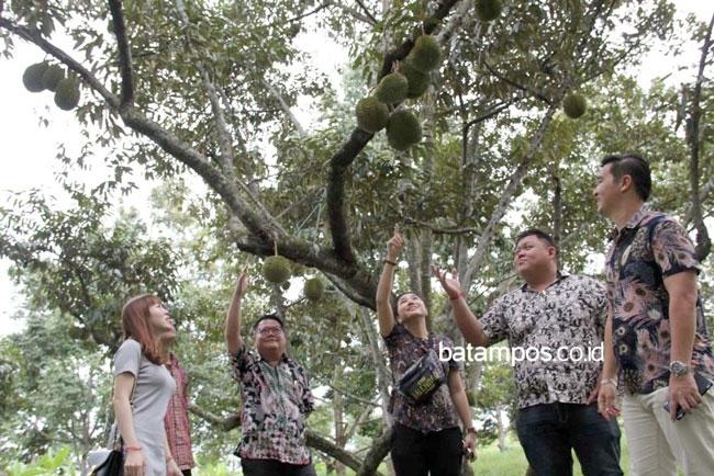 Berburu Durian di Citra Kebun Wisata Batam